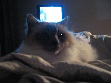 Ser på TV med Nemo på magen