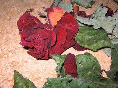 Död ros