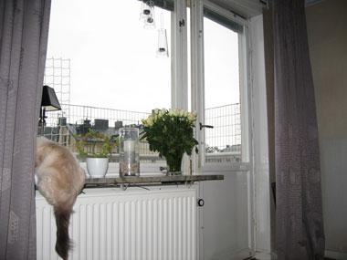 Kisse i fönstret
