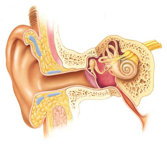 Чем лечить заложенность в ушах в домашних условиях